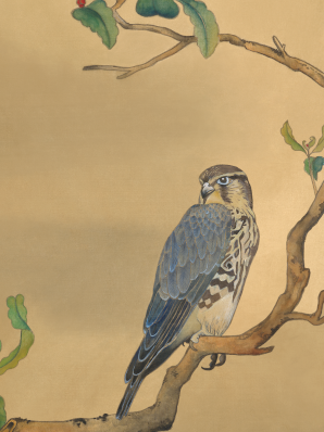 Watercolor painting on silk of a Merlin hawk perched on a elderberry branch.