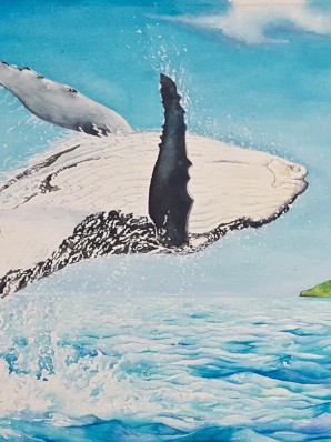 Watercolor painting of Humpback Whale leaping outside Lion's Lap lagoon.